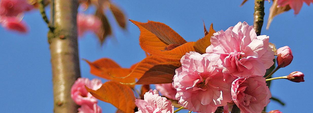 1st Bloom
