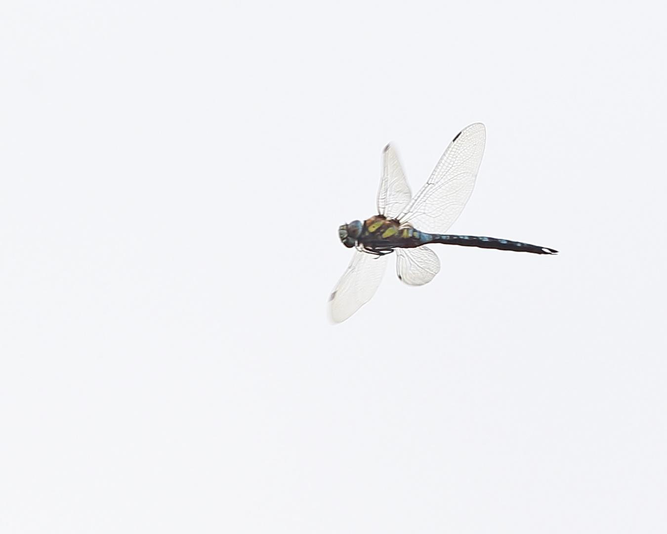 1ter Versuch Libelle im Fluch