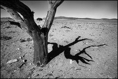 2 Bäume - 1 Schatten - 1 tod - 1 lebend