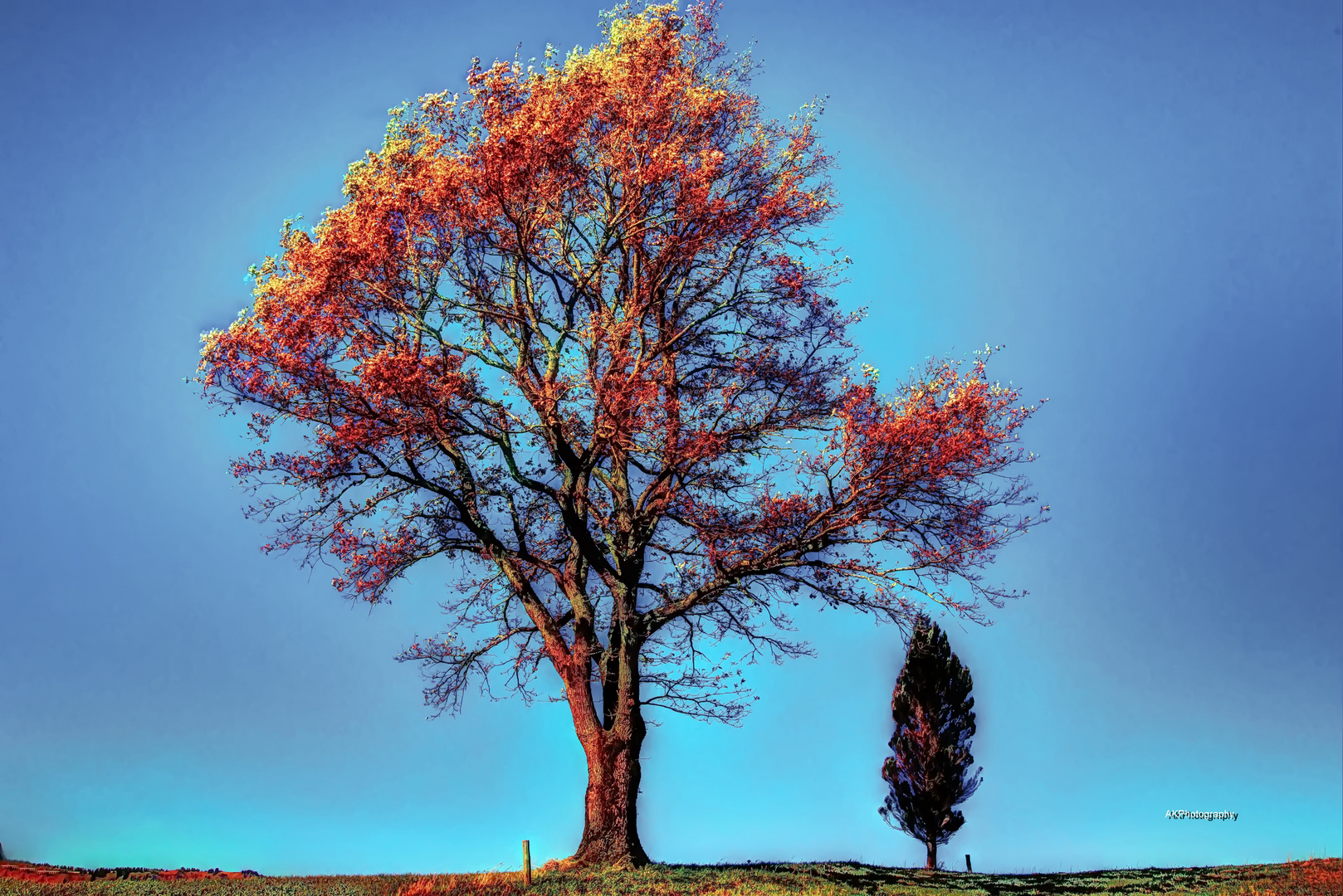 2 Bäume