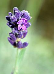 2. Blüte