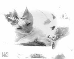 2 gatos