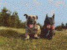 2 glückliche Hunde