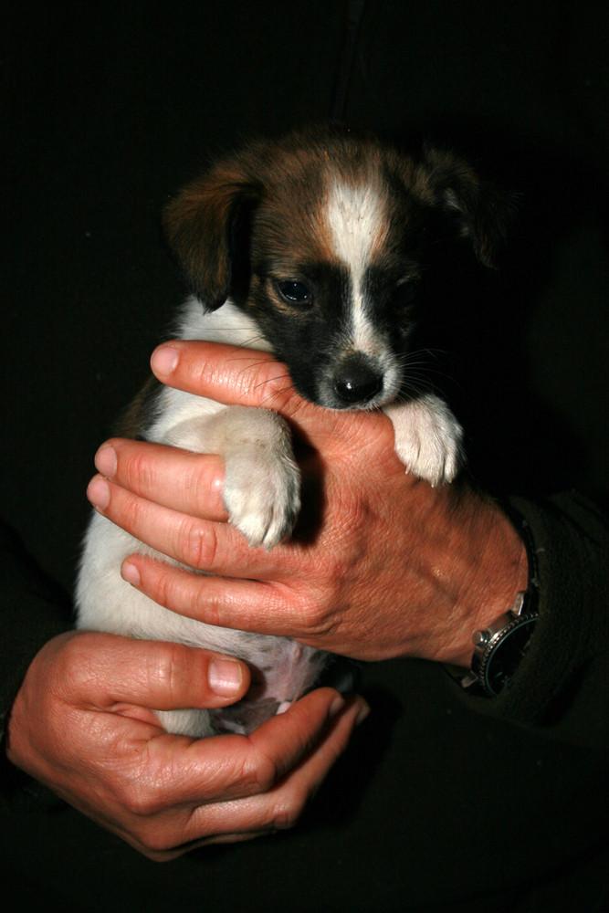 2 Handvoll Hund