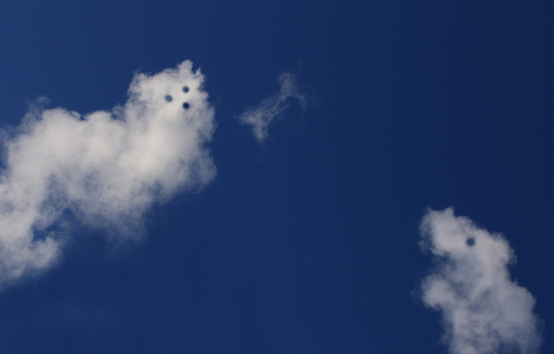 2 Himmelhunde beim Spiel mit einem Knochen