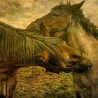 2 HORSES AT THE WADDENZEE