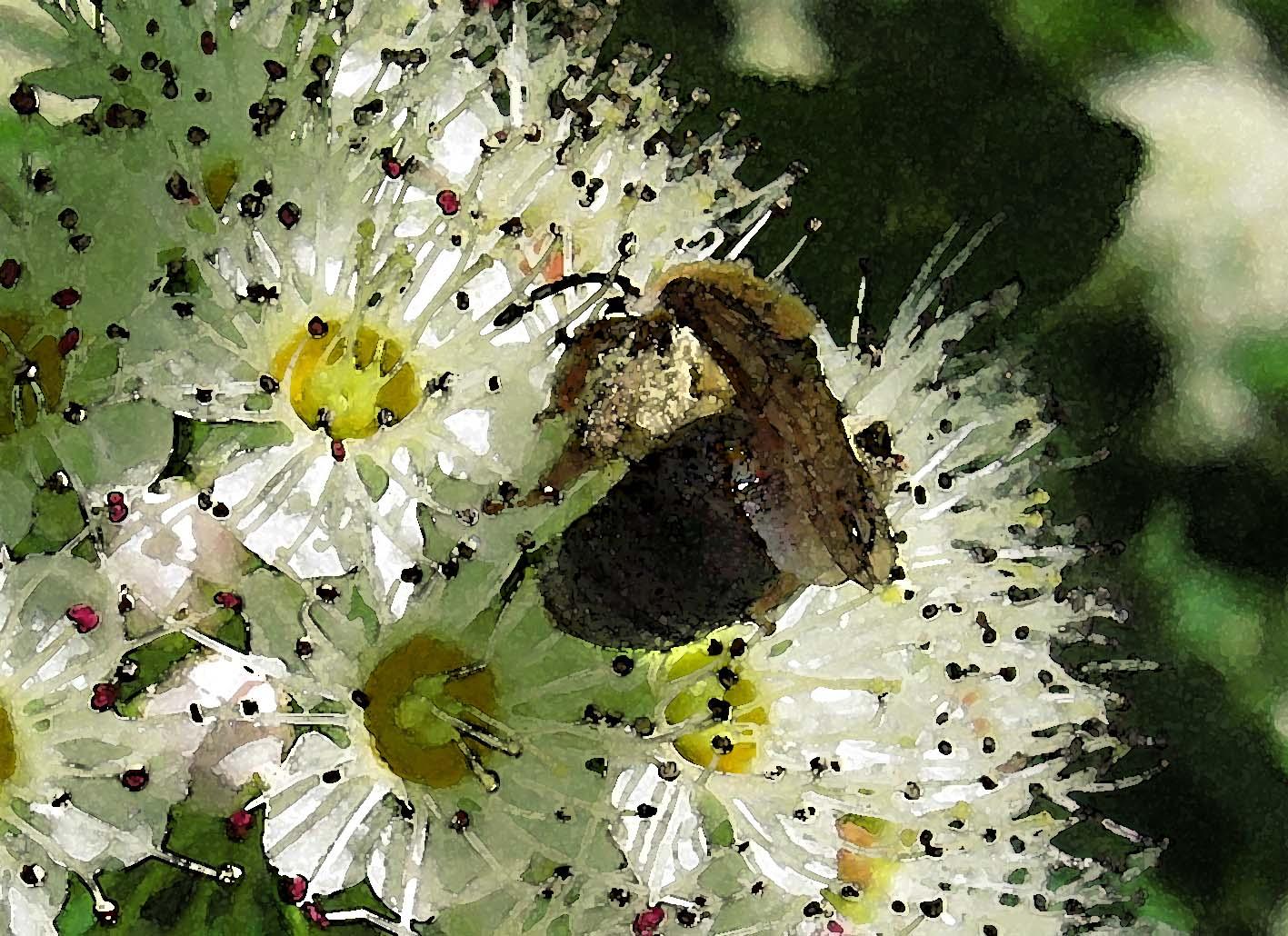 2 Insekten und 1 Blüte