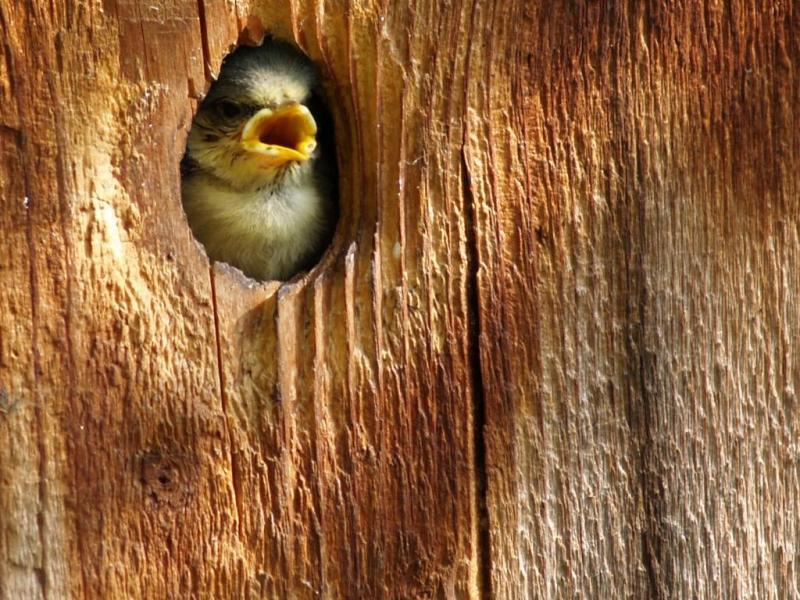 2 mummy, I'm hungry!!!