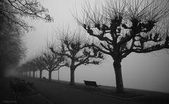-2- Nebelstimmung in der Seestraße in Konstanz