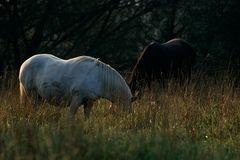 2 Pferde, -26