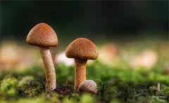 2 Pilzchen :-)