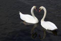 2 Schwäne - ein Herz