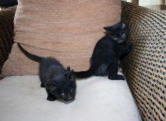 2 Schwesterchen, eines blind!!  in der Muelltonne gefunden!!