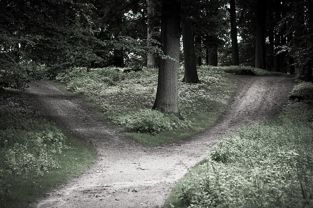 2 Wege im Wald