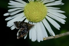(2) Wie unterschiedlich Schmetterlinge bei verschiedenem Lichteinfall aussehen, ...