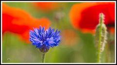 2006_0320 Wildblumenbeet