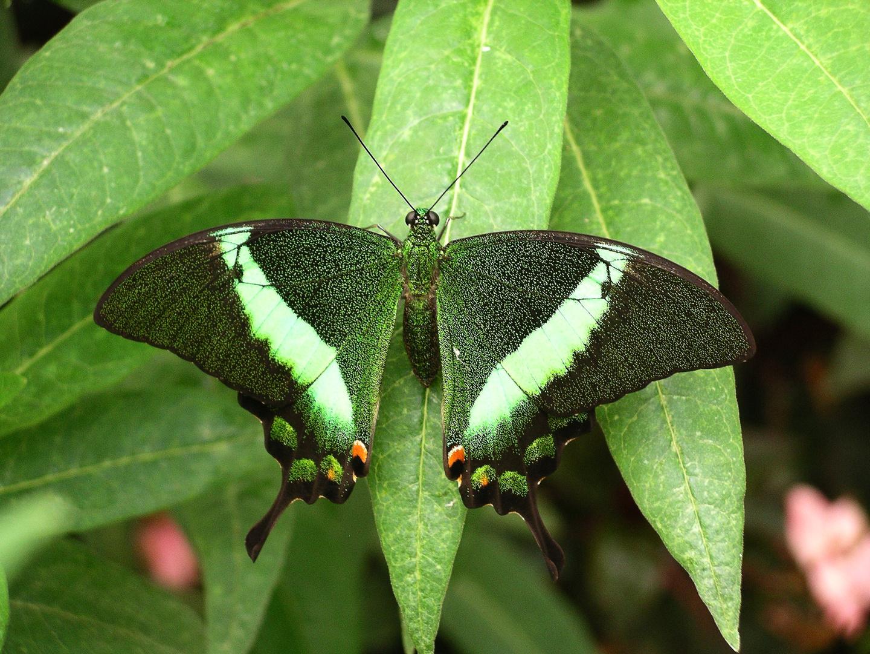 2010-08-11; Schmetterling