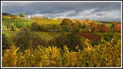 2010_2726 Weinberge im Herbst 6