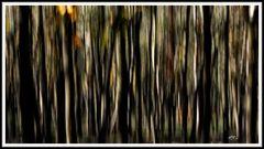 2011_3587 Der Wald (01)