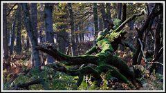 2011_3893 Der Wald (03)
