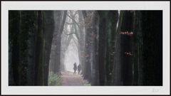 2012_4324 Ein Spaziergang im Dezember