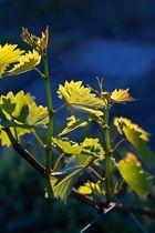2014, ein gutes Weinjahr ?