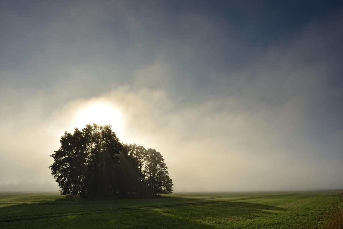 20150929 Baumgruppe mit Morgennebel