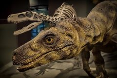 2015_1464 Raptor