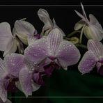 2016-11-fleur-orchid