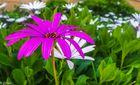 20160415_103905-35 Pink Flower