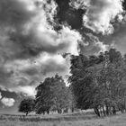 20170704 Bäume und Wiese im Wind