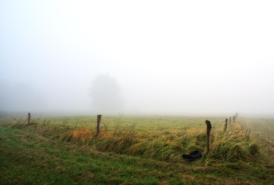 20171018 Weide im Nebel