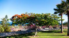 20180605-P1130340Das ist ein Baum