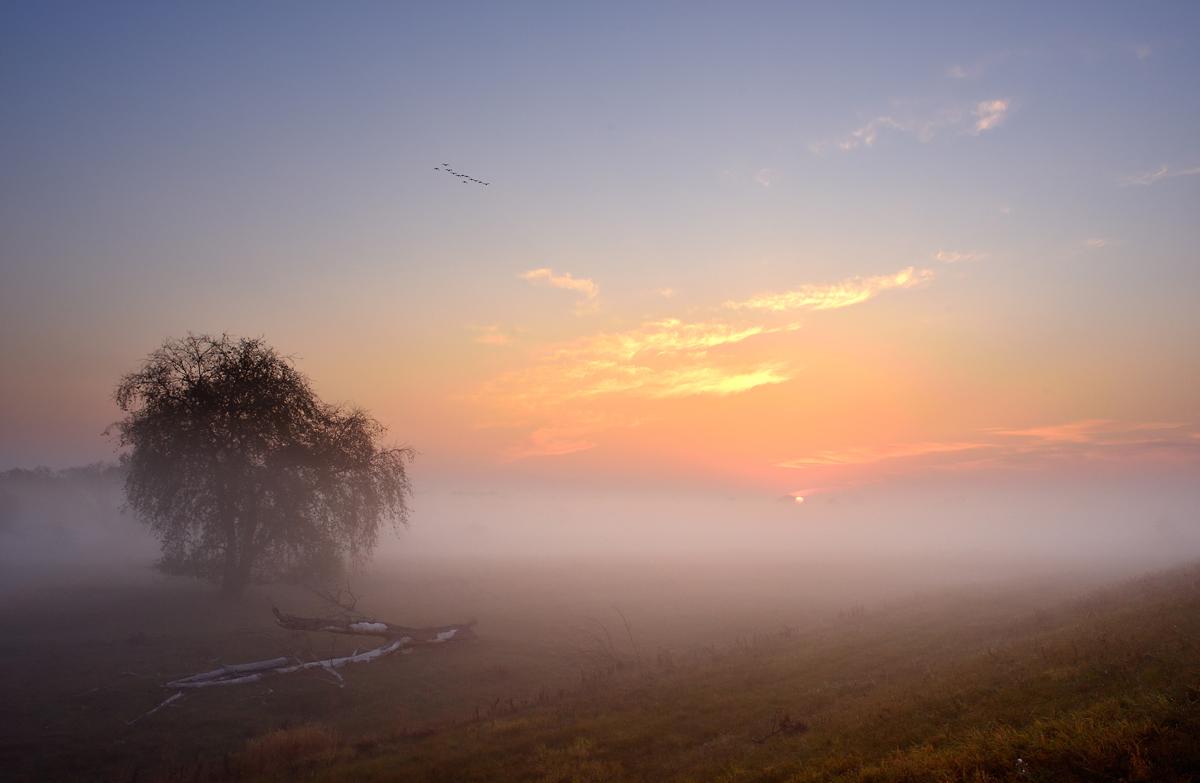 20181017 Sonnenaufgang mit Nebel auf den Oderwiesen fc
