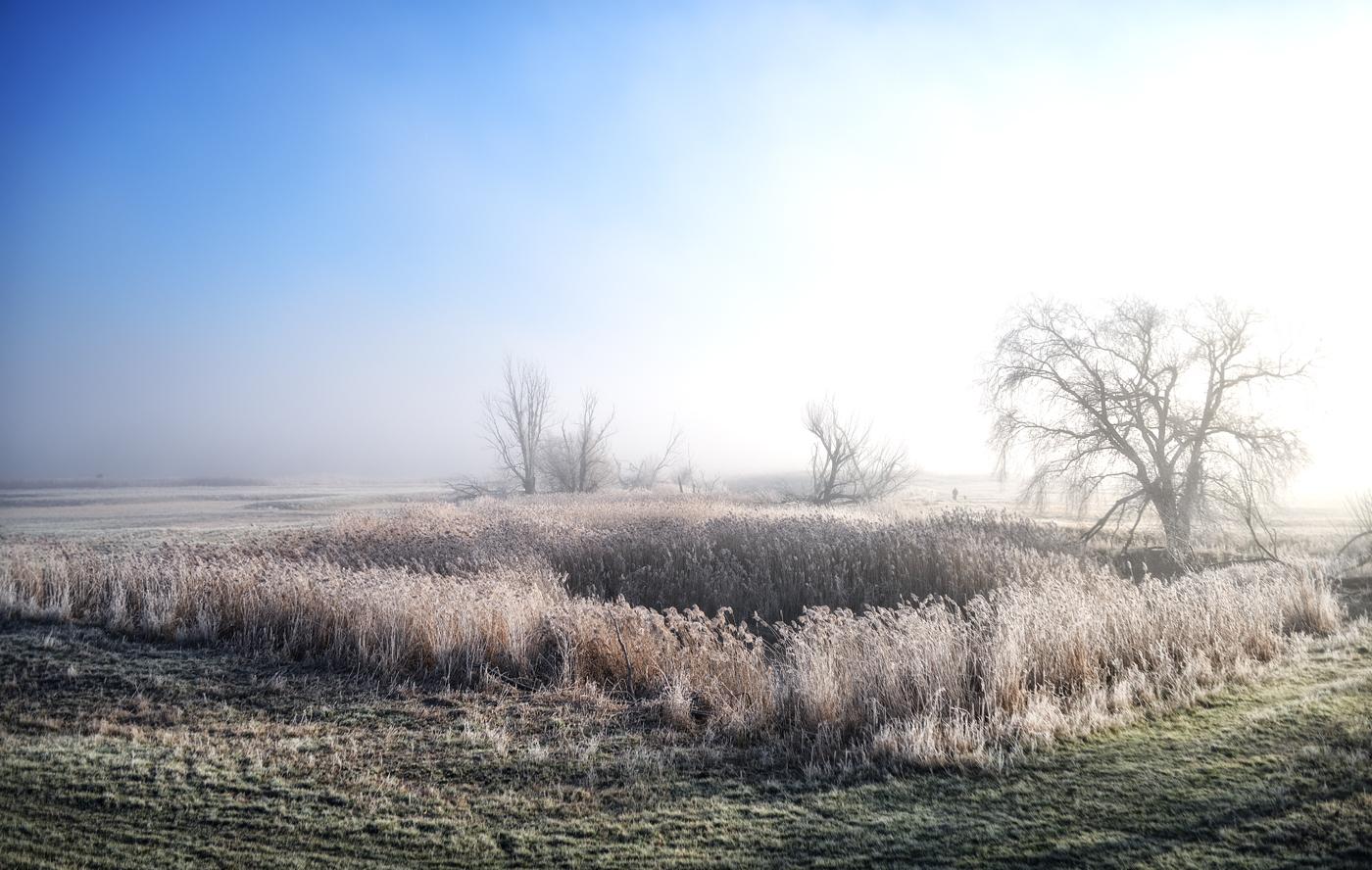 20181128 Frostiger Morgen in den Oderwiesen