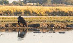 2019_09_Botswana