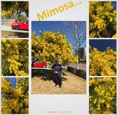 2019_mimosa