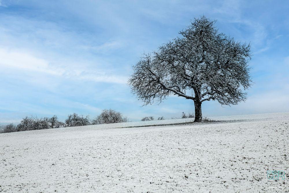 # 2101 Der erste Schnee