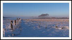 2102_0098 morgens in der Heide