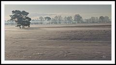 2102_6334 morgens in der Heide