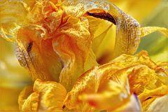 2104_8011 Tanz der Tulpenblätter