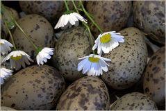 22 Kronen für ein Ei....