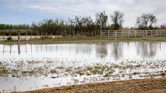 22 Petit étang aux Baumelles