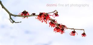 dezimü fine art photography