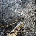 23.1.2020 Winterzauber mitten im Wald