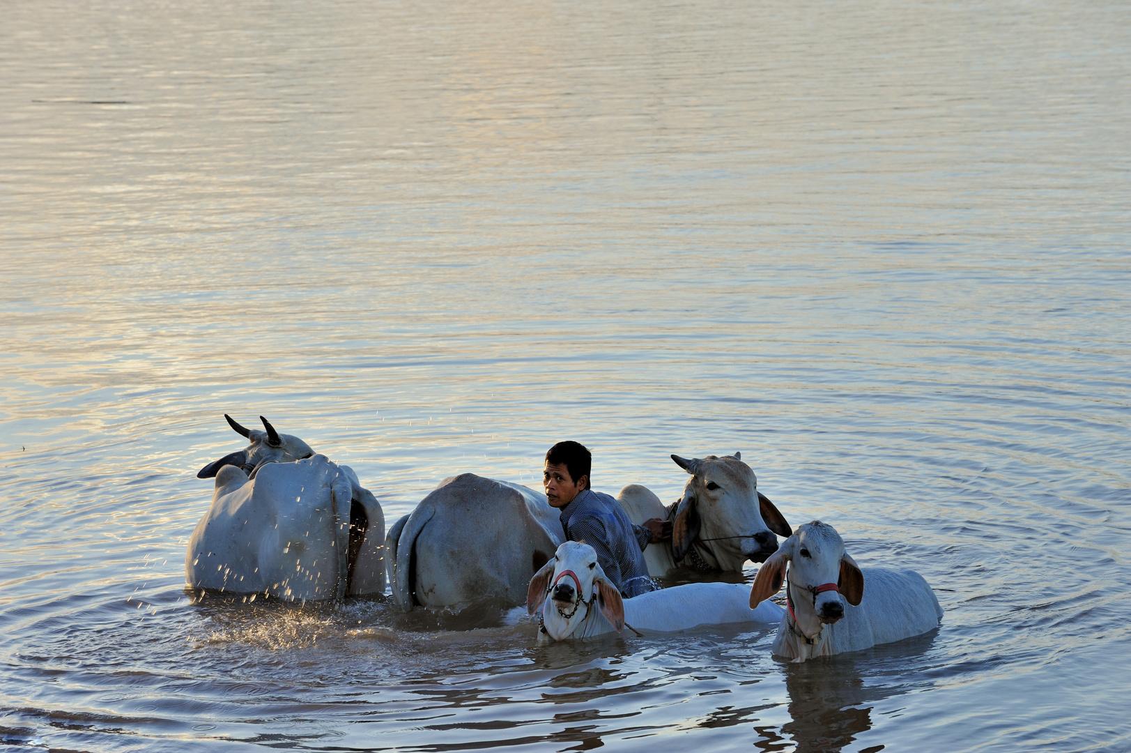 24 baño en el río Mekong