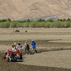246 - Between Shigatse and Gyantse (Tibet) - Agricultural Workers