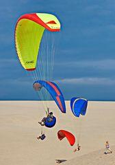 2599....papillons de dunes