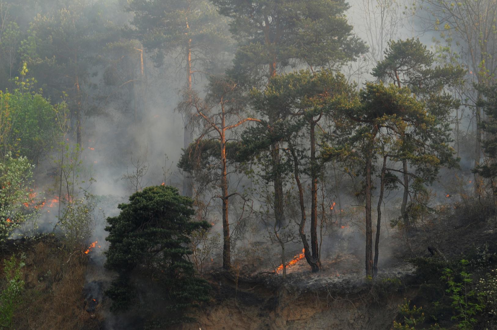 26. April 2011 der Schutzwald brennt!