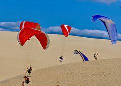 2662....papillons de dune